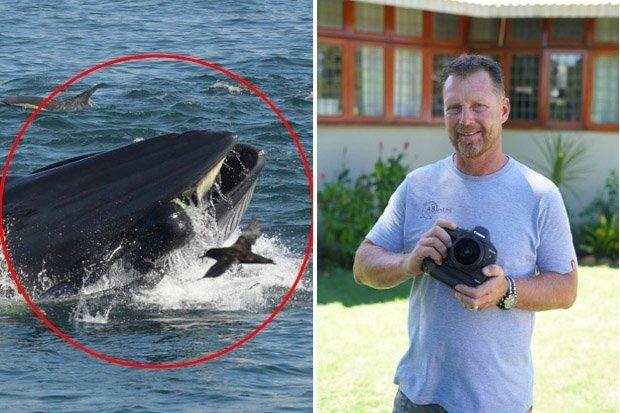 Дайвера выплюнул кит после того, как засосал его в рот