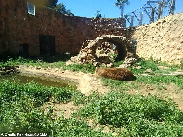 Животных оставили умирать в заброшенном испанском зоопарке, в том числе медведей и тигров в изношенных вольерах