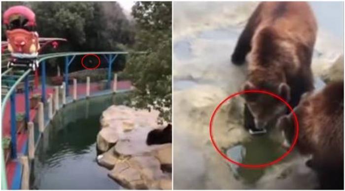 Мужчина случайно кидает айфон во время кормления медведей