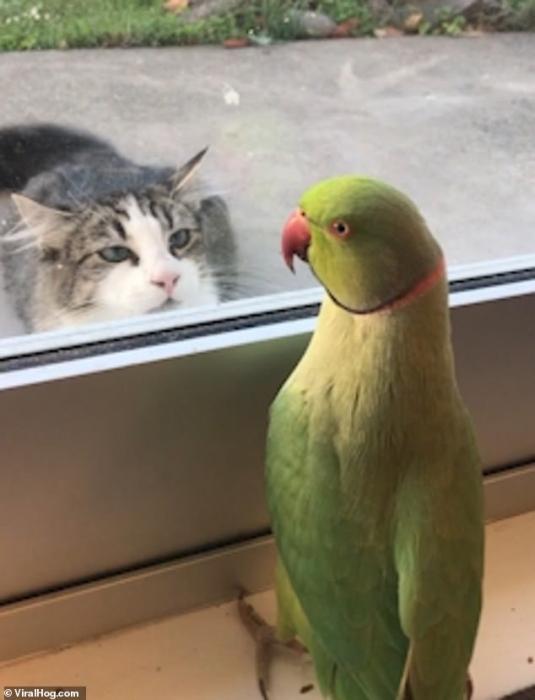 каждый гифка попугай когда уходишь в отпуск его юг, можно