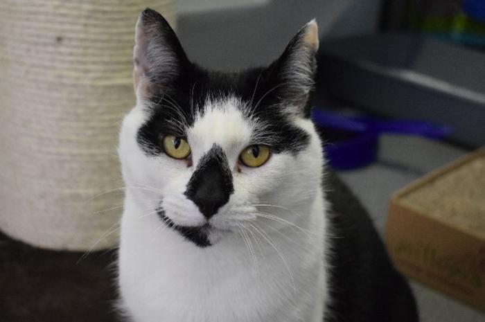 Знакомьтесь с английской «самой одинокой» кошкой, которая просто хочет дома и семьи на день рождения