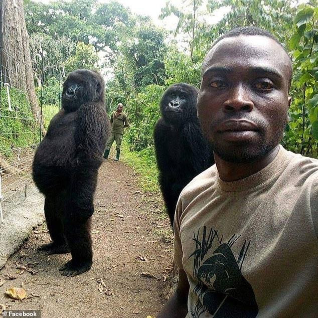 Анти-браконьерские рейнджеры сделали селфи с двумя гориллами, выглядящими как человек в национальном парке Конго