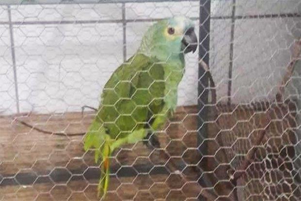 Попугая арестовали за то, что он «предупреждал наркодиллеров о приезде полицейских»