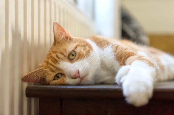 Кошки могут узнавать свои собственные имена - они просто предпочитают не слушать вас