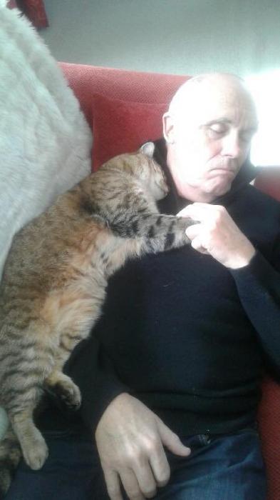 Случайный кот зашел, чтобы успокоить старика после операции, и они оба заснули, держась за лапы
