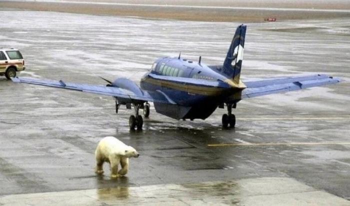 Самые странные вещи во время путешествия от белых медведей в аэропорту до жутких костюмов