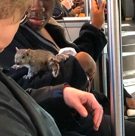 Белка прильнула к пассажирам метро Бостона