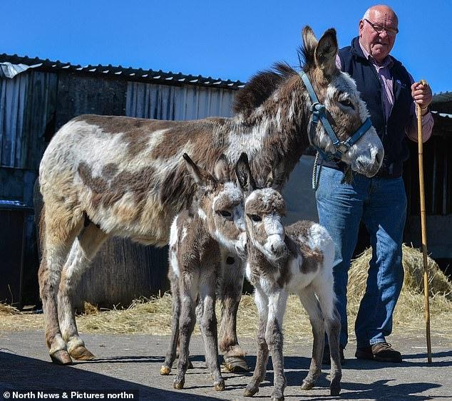 Ослица родила английских ослов близнецов. Их назвали Ронни и Редж