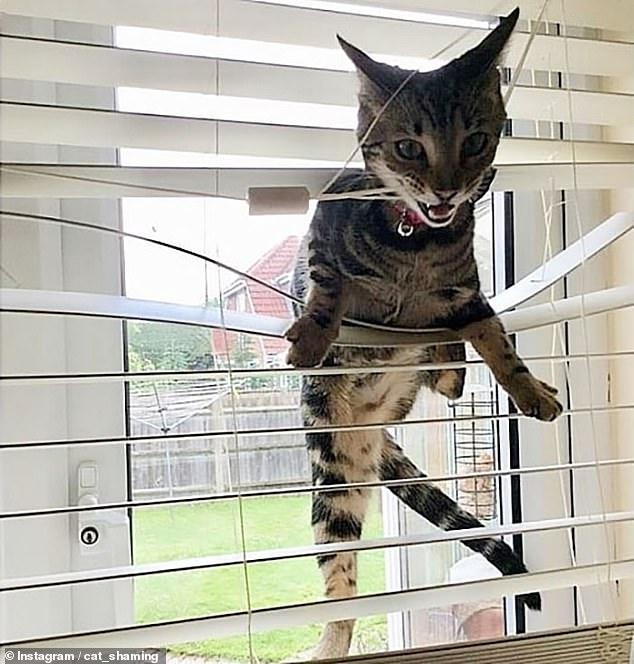 Владельцы домашних животных раскрывают какое зло причиняют их кошки