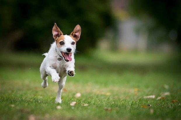 В Англии открывается парк приключений для собак - и это праздник для домашних животных