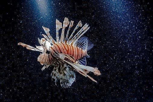 Необычная рыба-робот питается от «крови» и может работать сутками «без еды»