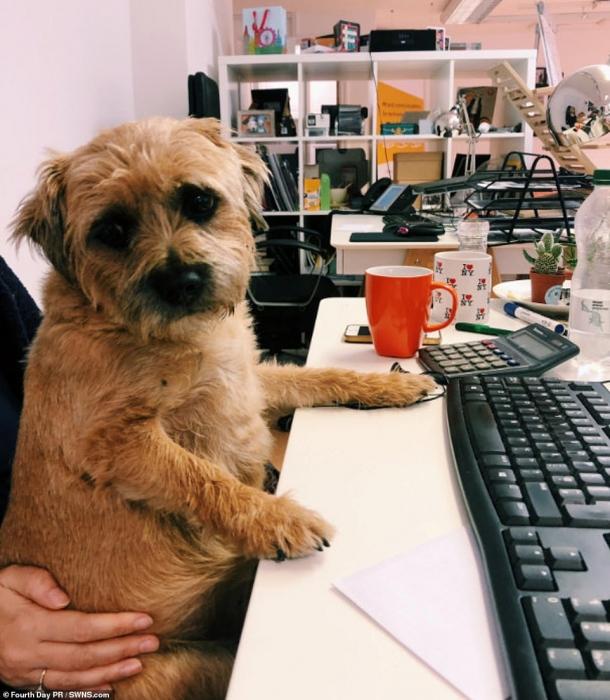 Владельцы домашних животных хвастаются в Твиттер восхитительными фото своих четвероногих друзей