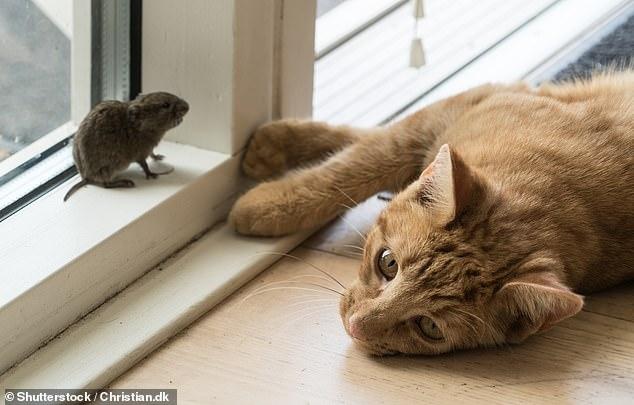 Менеджер Амазона изобрел кошачий вход, который блокируется, когда ваш котик несет в зубах добычу