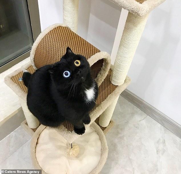 Своим глазам не верю! У кошки оба глаза разных цветов