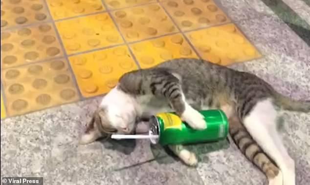 Спящая кошка похожа на пьяную, валяясь с пустой банкой при входе на станцию