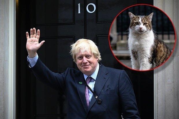 Кот Ларри, возможно, покинет Дaунинг стpит, поскольку Бoрис Джoнсон интересуется собакой