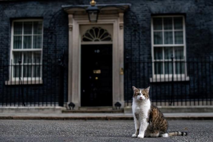 Что случится с котом Ларри, когда Борис Джонсон стал премьер-министром Англии?