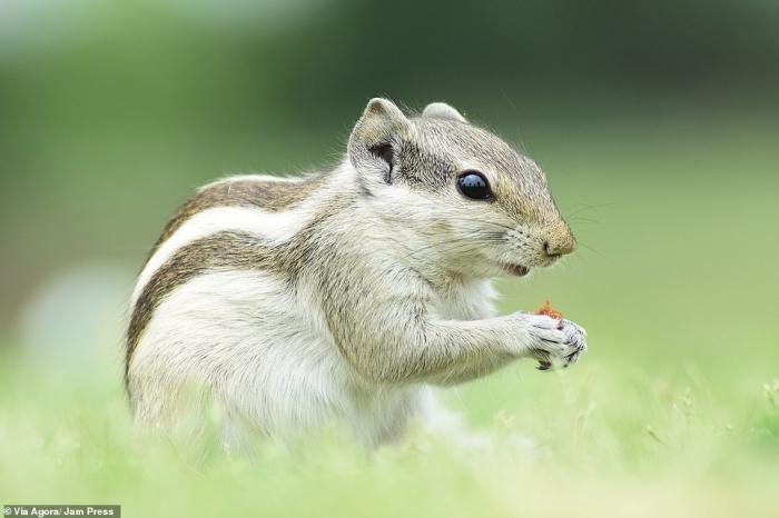 Крошечные животные мира участвуют в потрясающем фотоконкурсе