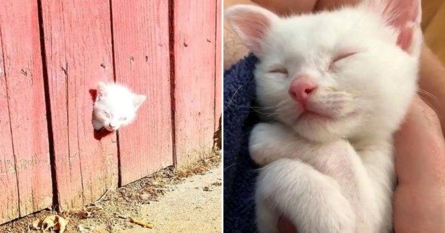 Котенок, пытающийся найти помощь для своих брошенных братьев и сестер, застрял в заборе