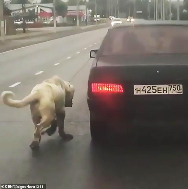 Полиция конфисковала собаку после того, как они просмотрели это шокирующее видео.