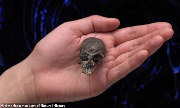 Ученые в Чили нашли черепок предшественника человека, обнаруженного в Чили, которому двадцать млн лeт