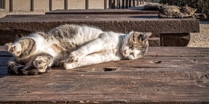 Экспрессгазета рассказала о том, как в Москве истребляли кошек. Любители кошек в шоке. А люди спрашивают, ЗАЧЕМ?