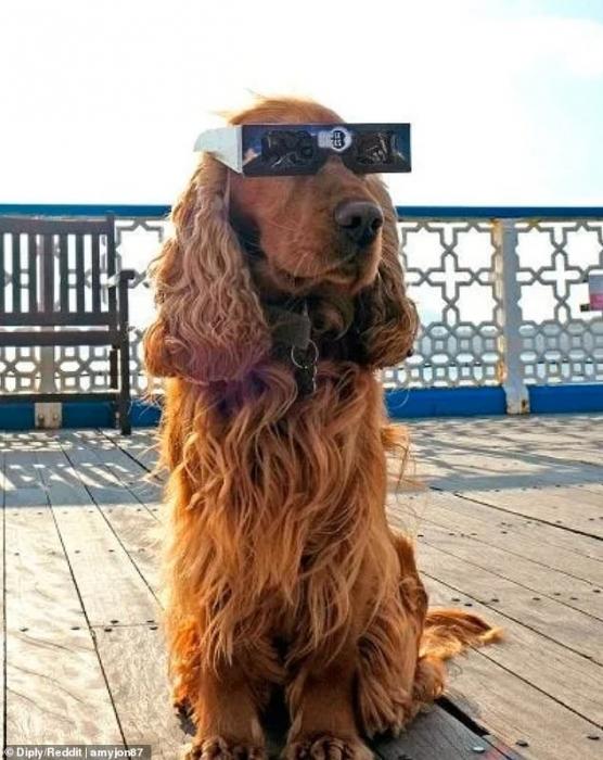 Фото, начиная от собак в солнцезащитных очках, до статуй в медицинских масках, напоминают о том, что всегда надо быть осторожным