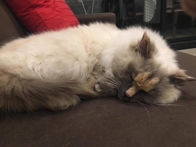 Пожалуйста, кто-нибудь возьмите эту очень милую кошку с пенисом на мордочке