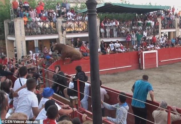 Бык прыгает в толпу во время испанского фестиваля и несется по оживленным улицам