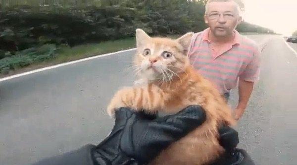 Мотоциклист останавливает движение, чтобы спасти маленького котенка на оживленной дороге