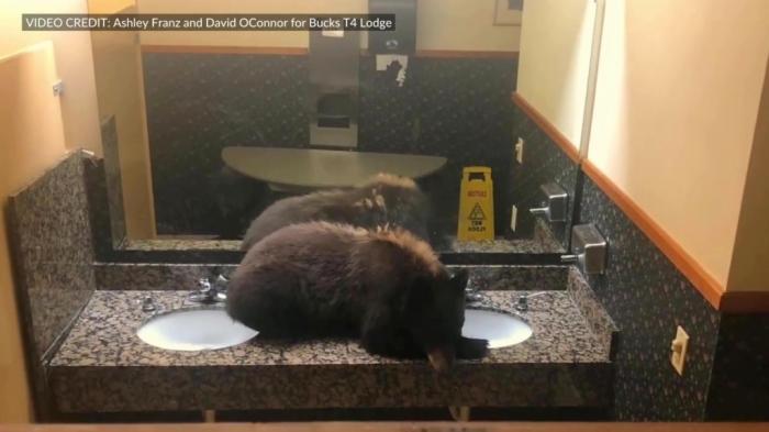 Медведь зашёл в отель и задремал
