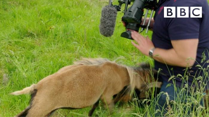 Журналиста Би-Би-Си раз и навсегда научили, никогда не работать с животными