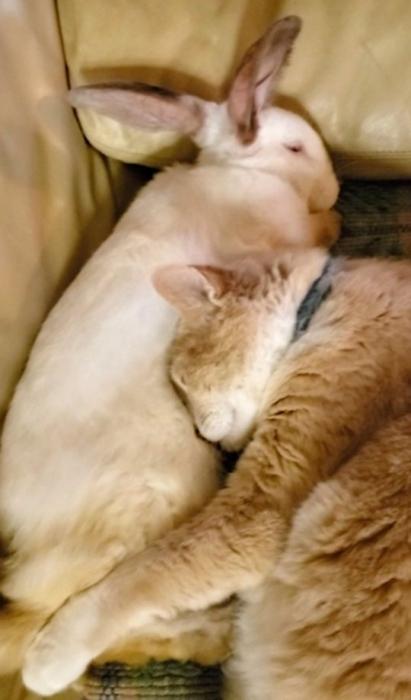 Очаровательный кролик и кошка лучшие друзья, и они абсолютно неразделимы