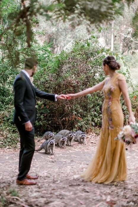 Любопытные еноты прервали свадебную фотосессию