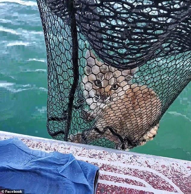 Удивительный момент семья на рыбалке поймала рысь посреди озера в Монтане