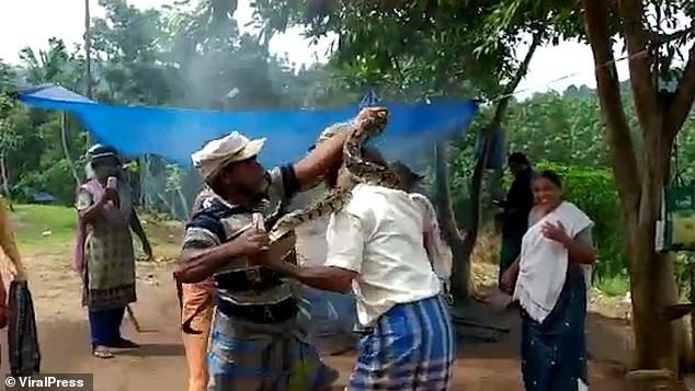 3-метровый питон обвивается вокруг шеи строителя и заставляет его задыхаться в индийской деревне