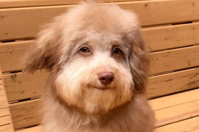 Очаровательная собака выглядит так по-человечески, что люди уверены, что её морда была отредактирована