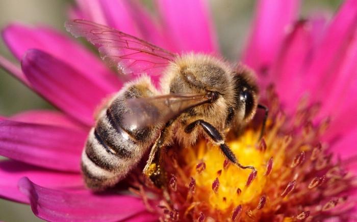 Как показывают исследования, пчелы могут быстро учиться, если их наказали за неправильные поступки