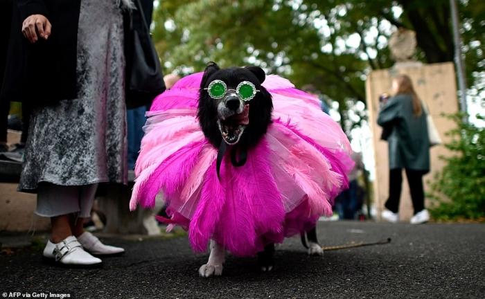 Сотни животных вышли на улицы в костюмах для ежегодного парада собак в Нью-Йорке в честь Хэллоуина