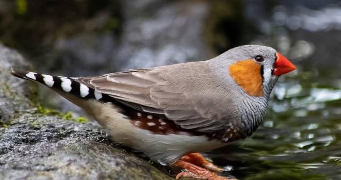 Ученые вложили в птиц ложные воспоминания, чтобы научить их новым песням