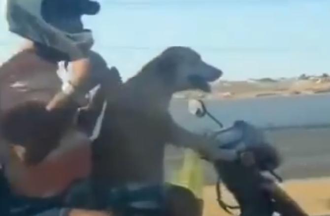 Собака ведет мотоцикл с двумя пассажирами. Этот фильм сломал интернет