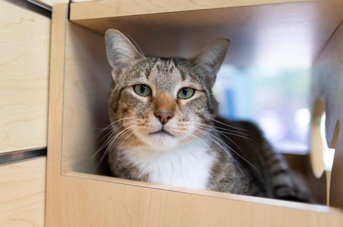 Кот был посажен в одиночку, потому что он все время помогал кому-то сбегать из приюта