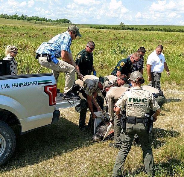 Мужчина съеденный 200-килограммовым аллигатором был на самом деле уже мертв от передозировки первитина