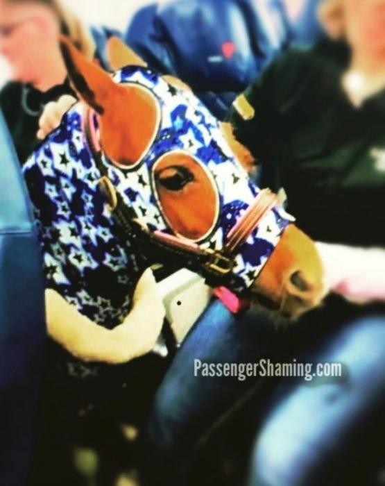 Пассажиры самолета начали роптать «хватит издеваться», после того как заметили лошадь в эконом классе