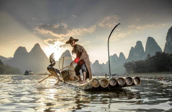На фото китайский рыбак, использующий морских бакланов, чтобы ловить рыбу