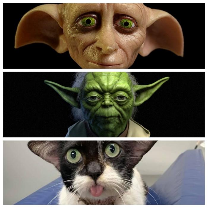Симпатичная кошка разделила интернет так как люди не могут решить похожа ли она на Йоду или нет