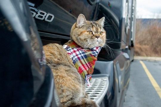 Дора кошка исследователь побывала почти во всех американских штатах на грузовике