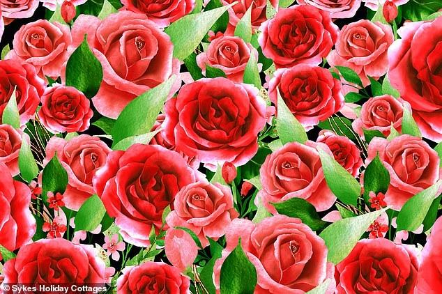 В этой головоломке надо найти пять сердец, спрятанных в букете красных роз, но так, чтобы побить 3-минутный рекорд