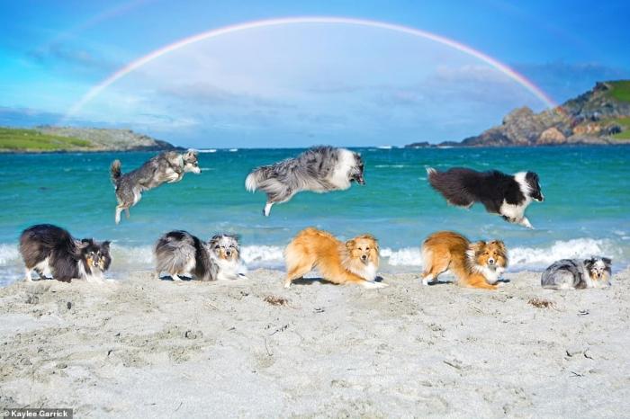 Работник скорой помощи делает со своими собаками благотворительный календарь. Вот некоторые примеры