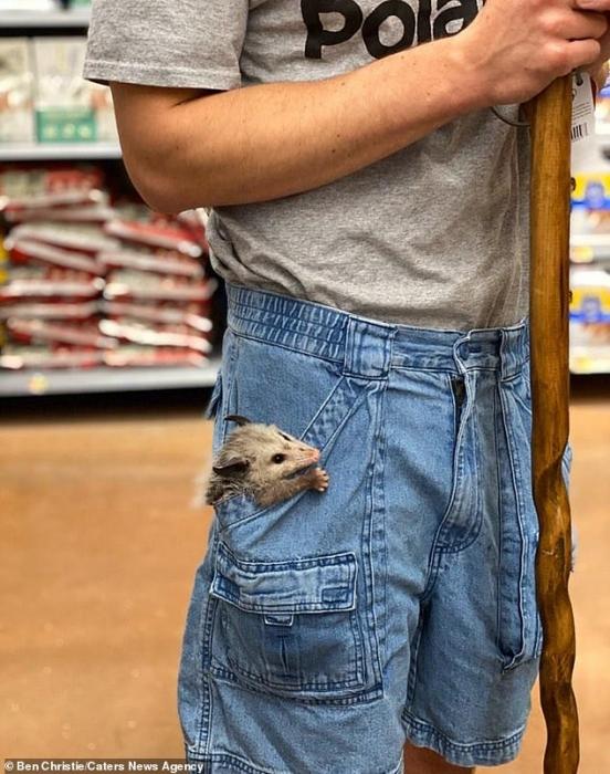 Студент взял своего четырехнедельного карманного питомца опоссума в магазин после спасения осиротевшего животного